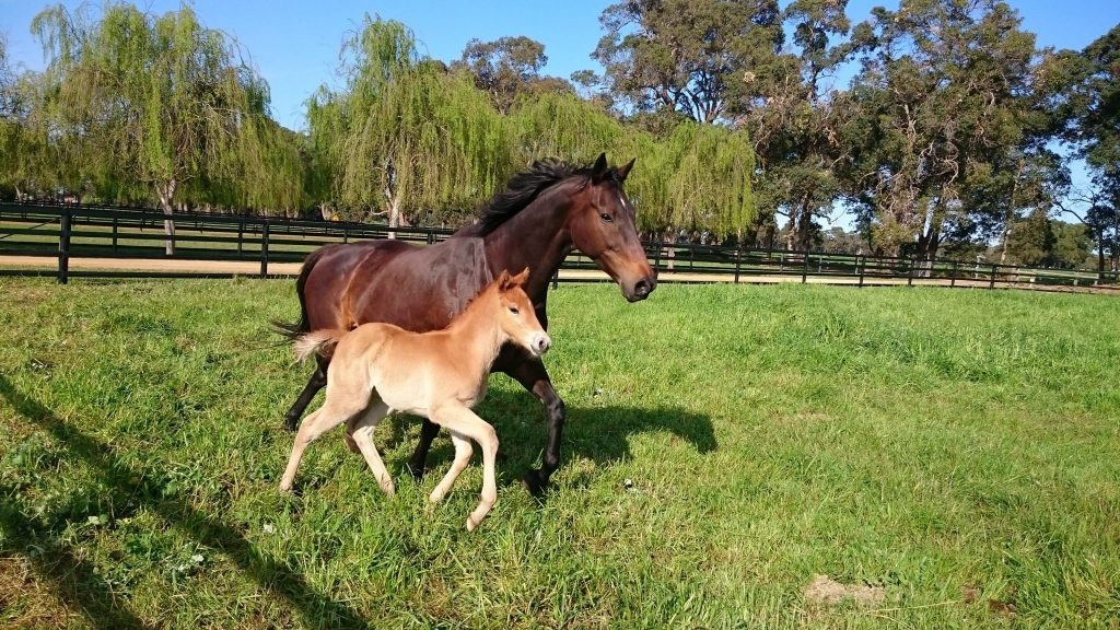 foaling paddocks